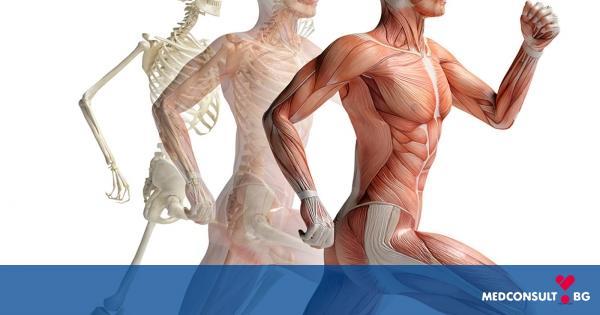 Как да поддържаме костите, ставите и мускулите си здрави