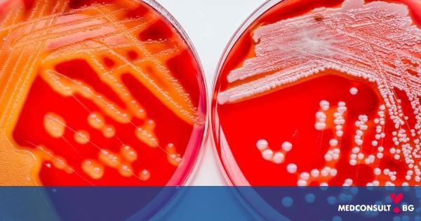 Стрептококи - причина за какви заболявания са те