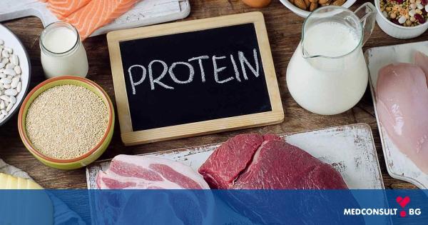 Каква е функцията на протеините в човешкия организъм