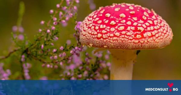 Какво трябва да се знае за отровните гъби