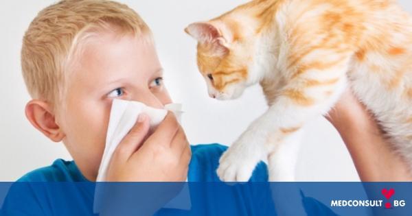 Алергия към домашни любимци при деца